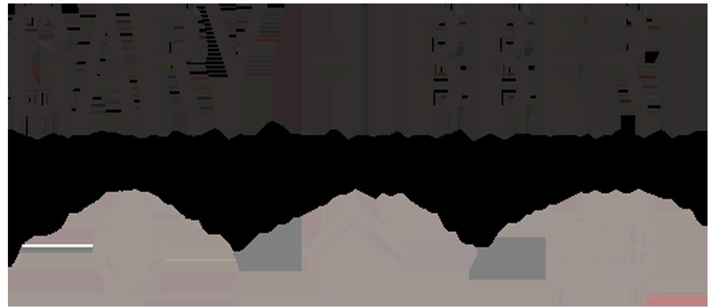 Gary Hibbert